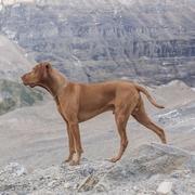 Pies i góry