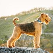 Pies na kamieniu