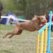 Skaczący pies