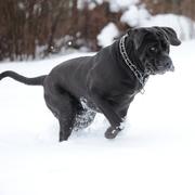 Skok psa