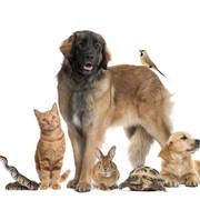 Pies i zwierzęta