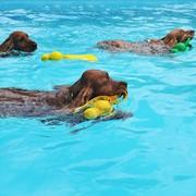 Pływające psy