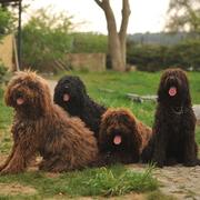 Rodzina Barbetów