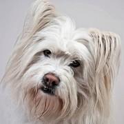 Elo rasa psów