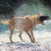 Mokry pies