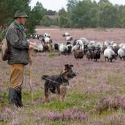 Pasterz i pies