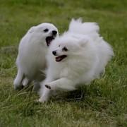 Pies Michała Anioła