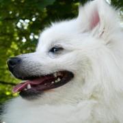 Pies do towarzystwa