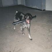 Bardzo groźny pies