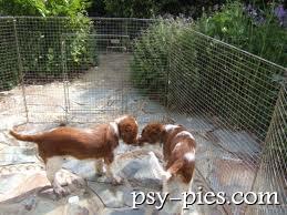 Pies w ogrodzie aranżacja