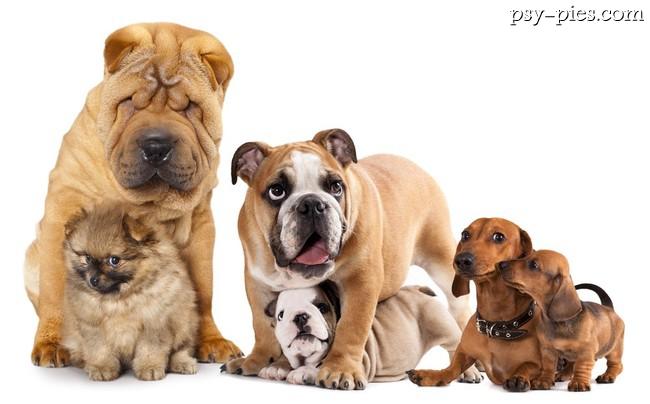 Wszystkie rasy psów na świecie