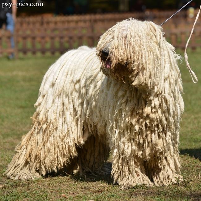 Dog Show In Carmel