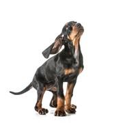 Badanie psa z krwi cena