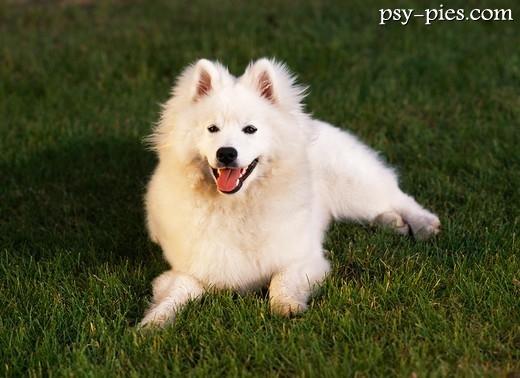 Zaawansowane Białe rasy psów TT98
