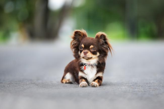 Psy Które Nie Rosną Cz1