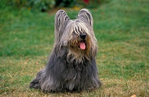 Psy Długowłose Cz 1 Duże I Małe Psy Z Długim Włosem