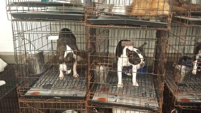 Missouri Dog Kennel Regulations