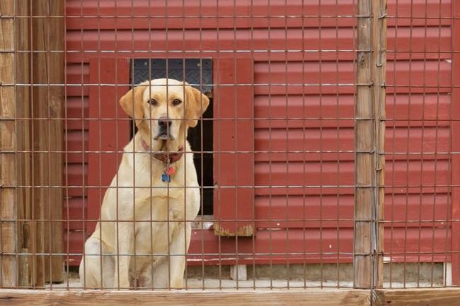 Znalezione obrazy dla zapytania pies wkojcu