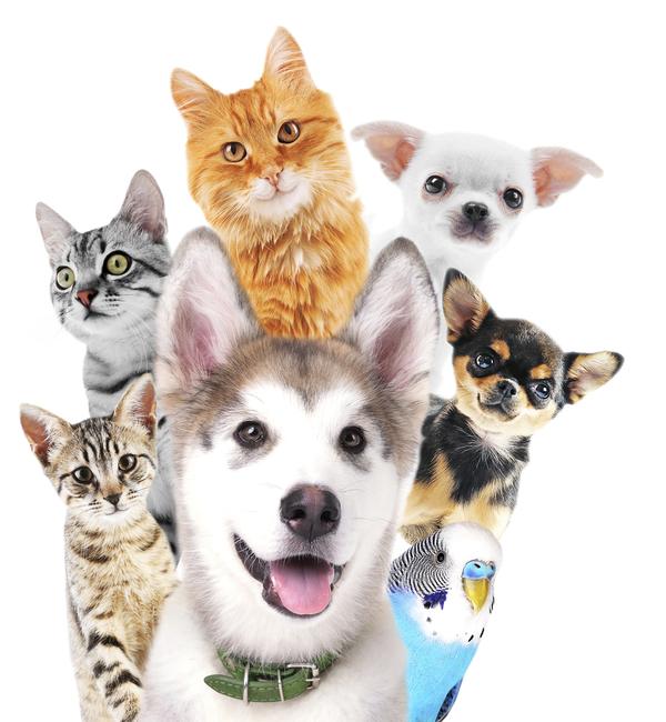 Choroby przenoszone przez zwierzęta domowe