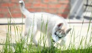 Dlaczego Pies Jeździ Zadem Po Podłodze