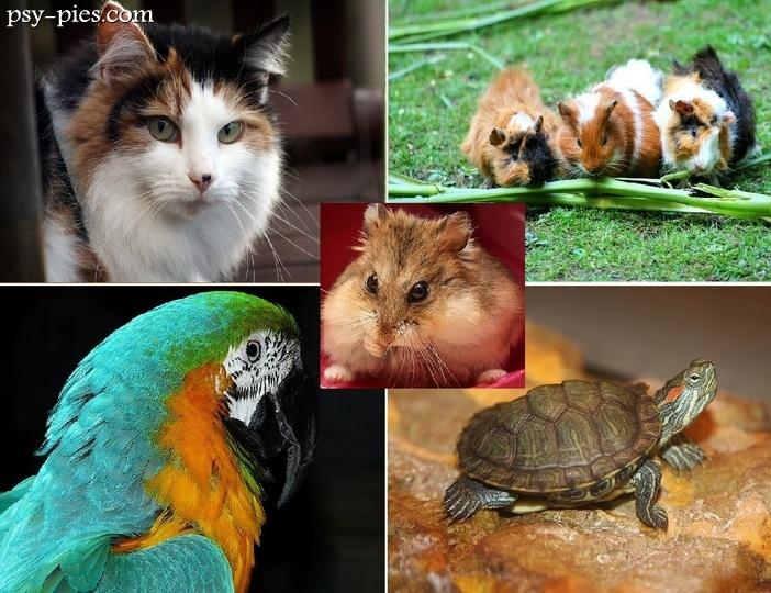 Niewiarygodnie Zwierzęta Domowe - Lessons - Tes Teach PV04