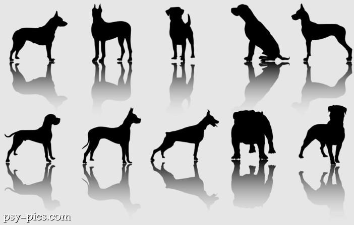 Rasy Psów Dużych I Psie Giganty