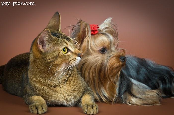 Pies Czy Kot Jak Wybrać Zwierzaka
