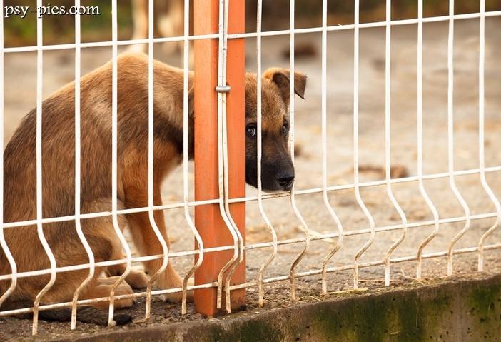 bezdomny pies