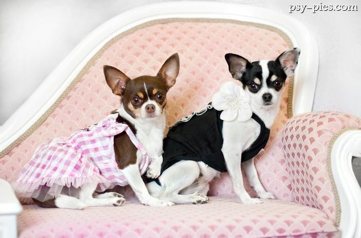 Psy na kanapie