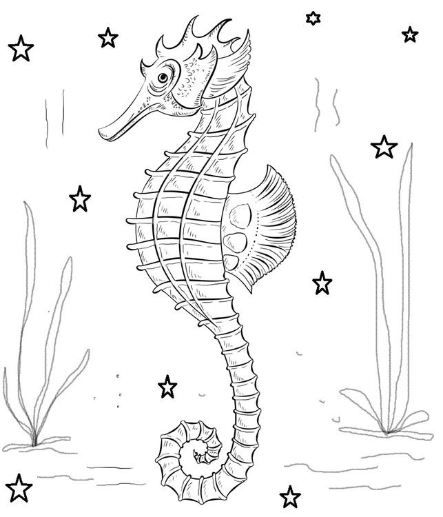 Konik Morski Plawikonik